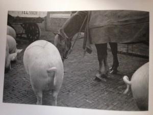 Abattoir, 1935. Foto uit 'Wiel van der Randen. Bescheiden camera, moderne blik'. Haarlem, Spaarnestad Photo, 2006.